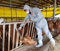 용인시, 상반기 '구제역' 일제 접종…소·염소 등 사육농가 306곳