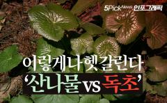 이렇게나 헷갈린다 '산나물 vs 독초'