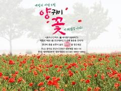 계절의 여왕 5월 안산 대부도, 붉은 꽃양귀비로 물들다