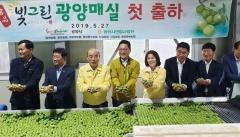 전남농협, '빛그린 광양매실 첫 출하식' 개최