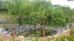 임실군, 감성리 일대 버드나무 생태 도시숲 조성 완료