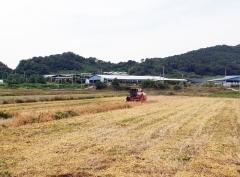 정읍시농업기술센터, 맥류 보급종 채종 단지 수매 마쳐