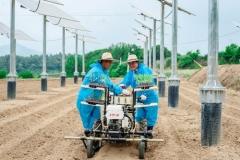 한수원, 영광에 한국형 영농병행 태양광시설 첫 준공