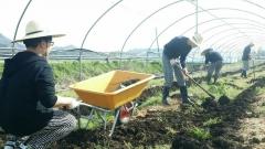 강진 푸소 체험, 농가 소득 향상 효과 '톡톡'