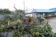 태풍 '링링' 강풍에 인명 피해…보령서 70대 할머니 숨져