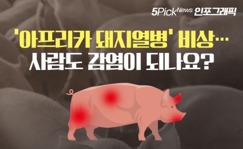 '아프리카 돼지열병' 비상…사람도 감염이 되나요?