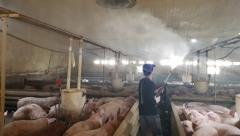 정부, 돼지 이동중지 조치 해제…돼지고기 값 안정화