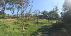 곡성군, 녹색자금 나눔숲 조성 쾌적한 생활환경 구축