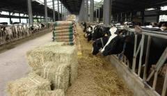 경주시, 젖소 간기능 개선 및 유단백율 향상 기술보급