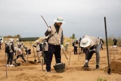 대한항공, 中 쿠부치 사막서 나무심기 봉사활동