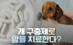 개 구충제로 암을 치료한다?