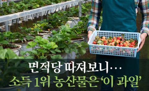 면적당 따져보니…소득 1위 농산물은 '이 과일'