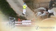 '돼지열병 의심' 충남 홍성 폐사 돼지, 정밀검사 결과 음성 판정