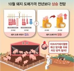 """농촌경제연구원 """"돼지열병 때문에…10월 돼지고기 가격 오를 듯"""""""