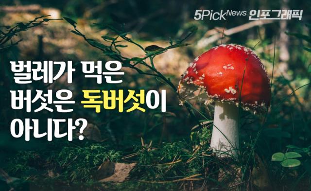 벌레가 먹은 버섯은 독버섯이 아니다?