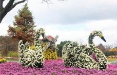 대구수목원, 28일부터 '국화전시회' 개최