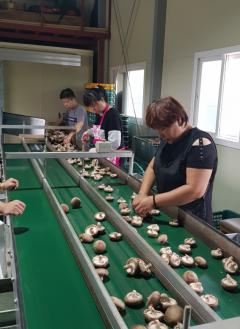 서산·당진·예산 표고버섯 농민들 공동판매 체재 구축
