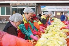 농협금융, 홍천군 왕대추마을서 김장김치 나눔 활동