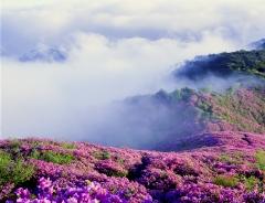 장수 봉화산 산철쭉군락지 국가산림문화자산 지정