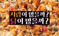 사람이 많을까? 닭이 많을까?