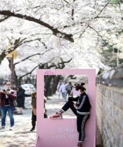 경주벚꽃축제, '2020 경북 우수축제' 선정