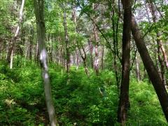 '숲 속의 대한민국' 실현을 위한 국유림 확대
