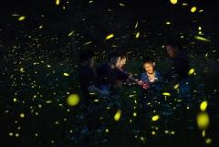 무주군,제24회 무주반딧불축제 프로그램 공모