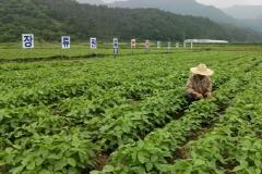 순창군, 논 타작물 재배지원사업 신청 접수