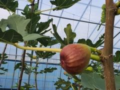 곡성군, 도농교류 촉진을 위한 농산물 직거래 마케팅 지원