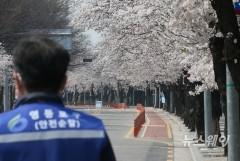 코로나19로 통제된 윤중로 벚꽃길