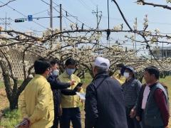 강인규 나주시장, 저온 피해 배 과수농가 방문