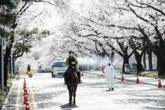 한국마사회, '렛츠런파크 서울 야간 벚꽃축제' 취소…내년 기약