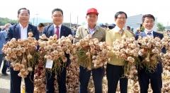 고흥 녹동농협, 햇마늘(주대마늘) 첫 산지경매 개시