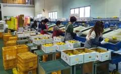 경북통상(주), 4월 농특산품 수출 51% 증가