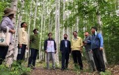 경북도, 자작나무숲 권역 '웰니스 산림관광지' 조성