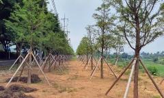 정읍시, 하북동 노후 공단 인근에 '미세먼지 저감 숲' 조성