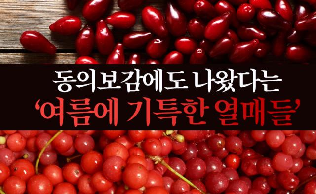 동의보감에도 나왔다는 '여름에 기특한 열매들'