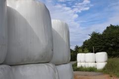보성군, 수해피해 구례 축산농가에 조사료 220톤 기부