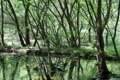 정읍시, 월영습지와 솔티숲 생태관광 명소 기반 구축 '총력'