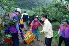 영천시, 태풍피해 사과농가 긴급지원... 낙과 전량 수매