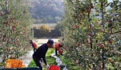 대구시설공단, 1사1촌 자매결연 맺고 농산물 공동구매