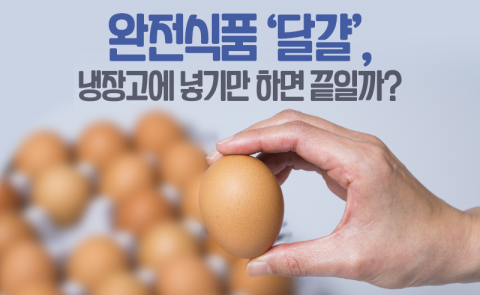 완전식품 '달걀', 냉장고에 넣기만 하면 끝일까?
