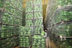 이마트, 농림부와 김장대전…배추 작년보다 45% 저렴