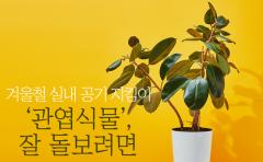 겨울철 실내 공기 지킴이 '관엽식물', 잘 돌보려면