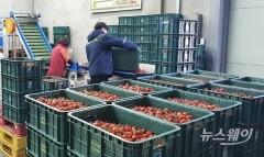전남농협, 2020년 생산자조직 연도대상 본상 수상