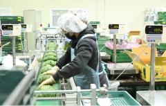 """CJ프레시웨이, 동부권 농산물 PS 센터 가동···""""수확→판매 반나절"""""""