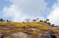 [내일 날씨]맑고 포근한 봄 날씨···큰 일교차 주의