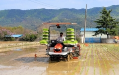 경주시 올해 첫 모내기 시작... 쌀 생산량 6만톤 예상