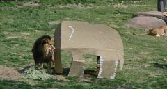 LG전자, 제품 포장 박스 동물 놀이도구로 기증