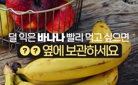 덜 익은 바나나 빨리 먹고 싶으면 ○○ 옆에 보관하세요